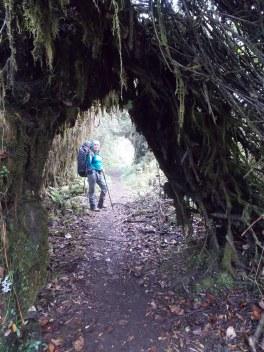 Túneles de vegetación